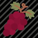 grape, fruit, wine, winery