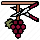 harvesting, grapes, clusters, winery