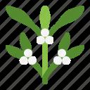 christmas, green, mistletoe, parasite, pest, plants, winter icon