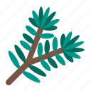 fir, christmas, leaf, winter, tree, pine, plants