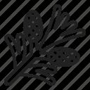 cone, pinecone, christmas, plants, nature, winter, tree
