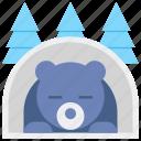 winter, hibernation, bear, sleeping