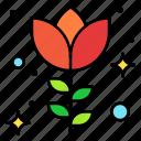 blossom, flower, love, red, rose, present