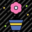 flower, pot, plant, garden, soil