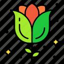 blossom, flower, gardening, red, rose