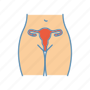 anatomy, fallopian tubes, female, gynecology, reproductive system, uterus, vagina icon