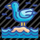 seagull, fauna, beak, birds, fly