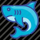 shark, fish, animal, predator, aquatic