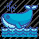 whale, aquatic, animal, sea, ocean