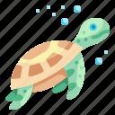 turtle, sea, aquatic, animal, aquarium