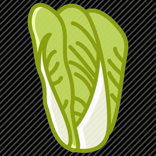 bio, cabbage, garden, salad, vegetable, vitamins, yumminky icon