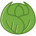 bio, cabbage, food, garden, vegetable, vitamins, yumminky icon