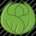 garden, vegetable, vitamins, bio, cabbage, food
