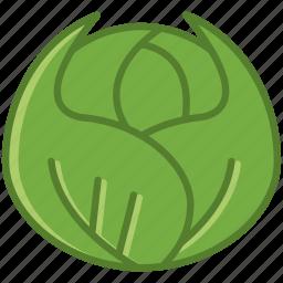 bio, cabbage, food, garden, vegetable, vitamins, yumminky icon