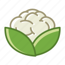 bio, cauliflower, food, garden, vegetable, vitamins, yumminky icon