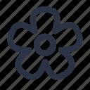 camomile, flower, petal