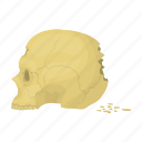 bone, cranium, human, people, person, profile, skull icon