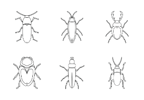 Bugs - outline